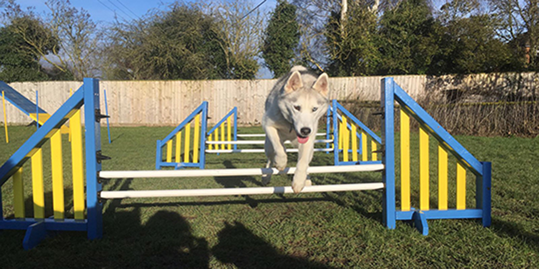 Day Boarding For Dogs Didcot
